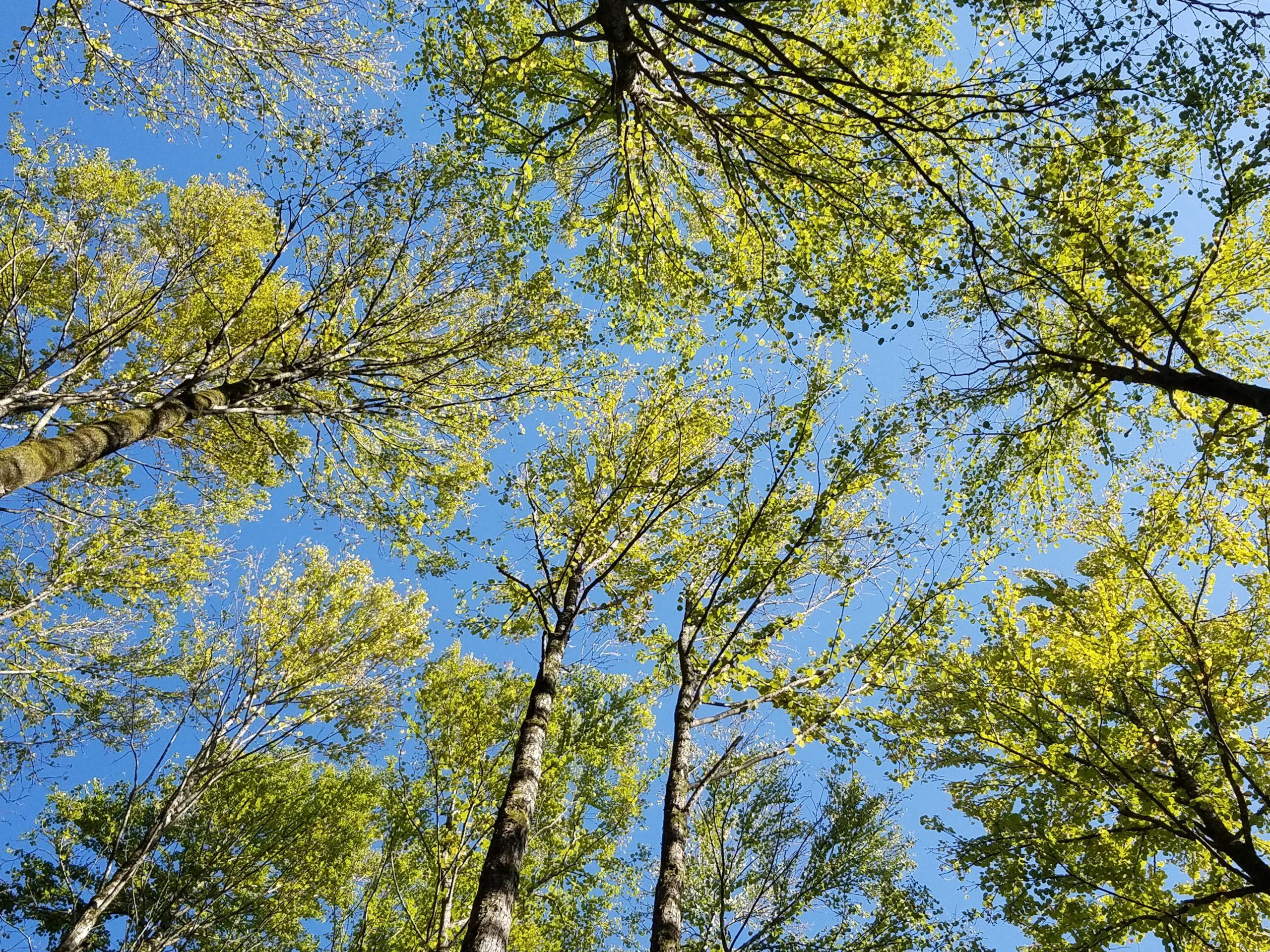 【終了しました】森林セラピストとヨガ講師の野山遊び「桂」*9月26日(土)13:00~15:30@県民の森