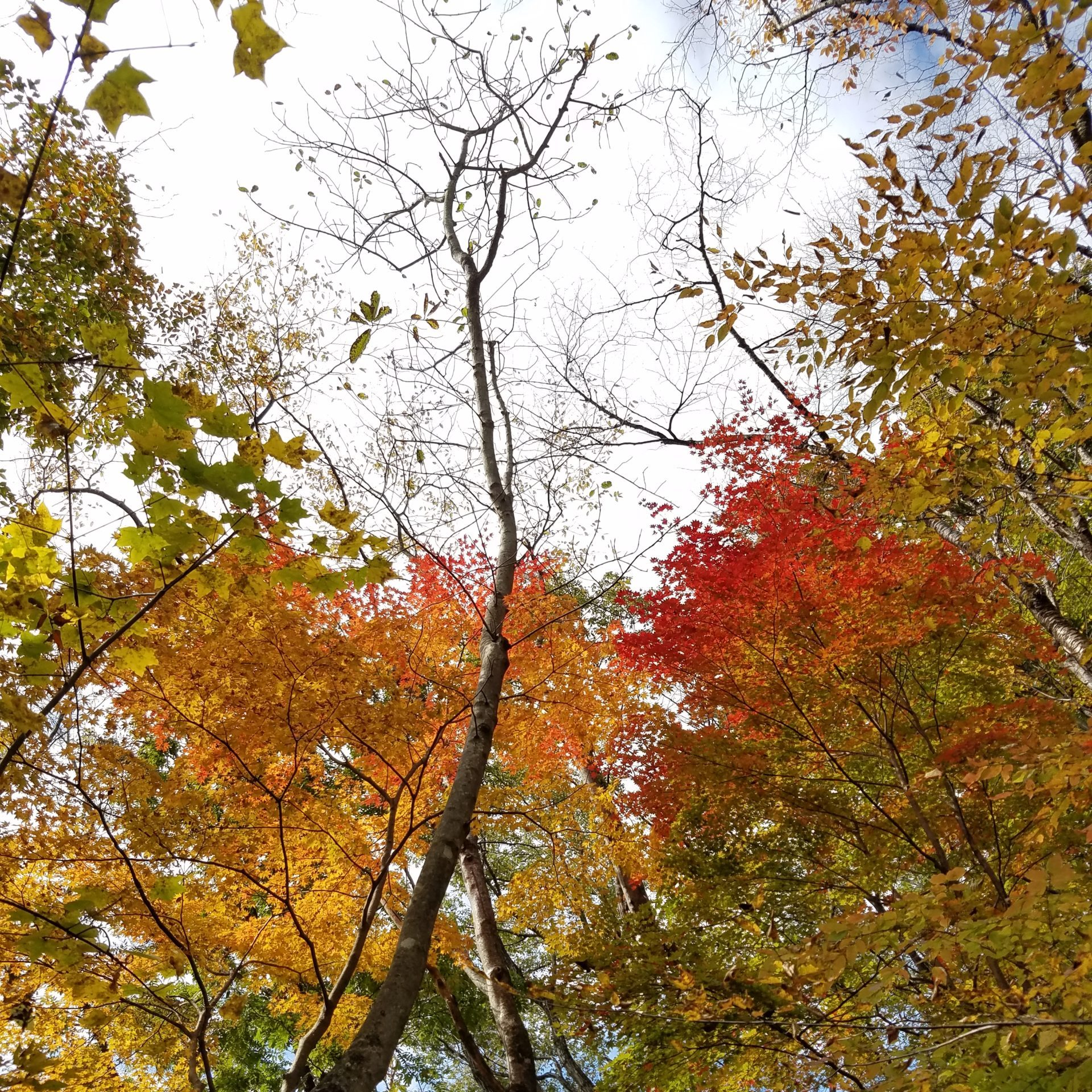 【終了しました】森林セラピストとヨガ講師の野山遊び「楓」*11月22日(日)10:00~12:30@県民の森