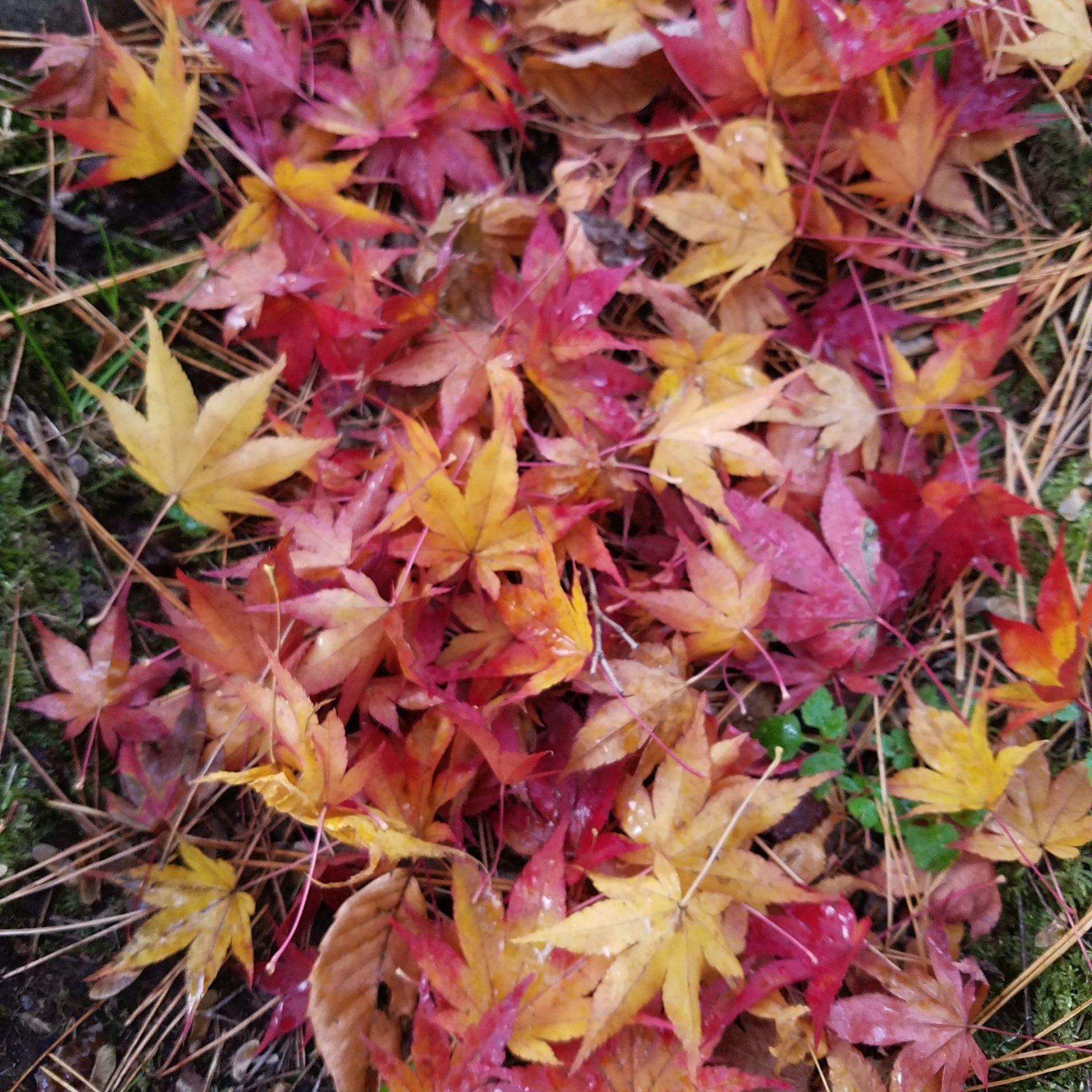 【終了しました】森林セラピストと歩く。@プレジャーピクニック*11月29日(日)10:00~12:00国際センター駅2F青葉の風テラス